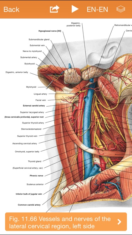 Sobotta Anatomy Atlas screenshot-3