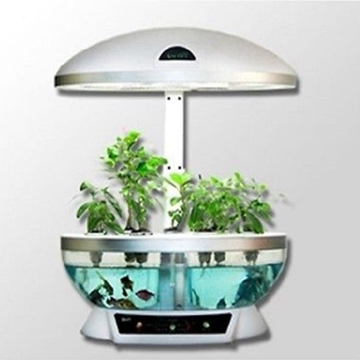 How To Make An Indoor Aquaponics System By Xi Zhang