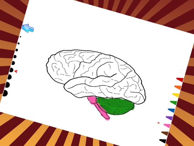 Anatomía & Fisiología juegos De Pintura Para Niños en App Store