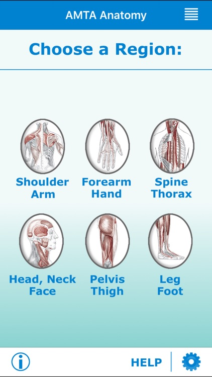 AMTA Massage Anatomy Guide