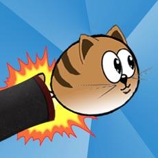 Activities of Cat Blast