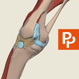 Knee: 3D Real-time Human Anatomy