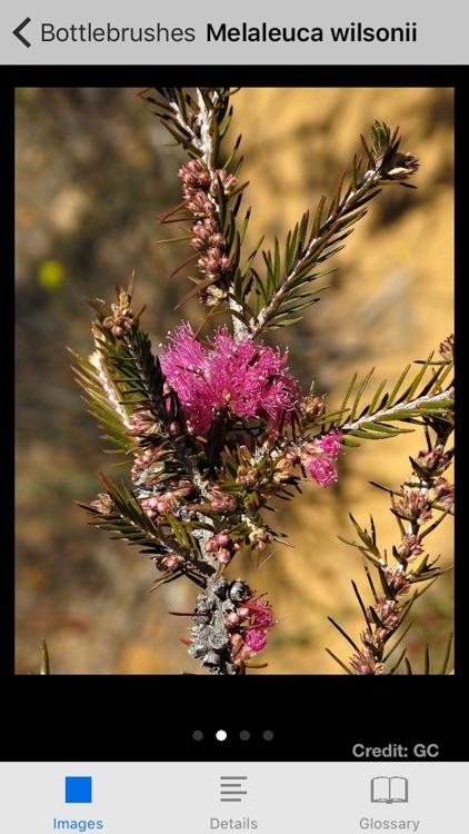 Mallee Plants of SA and Vic. screenshot-4