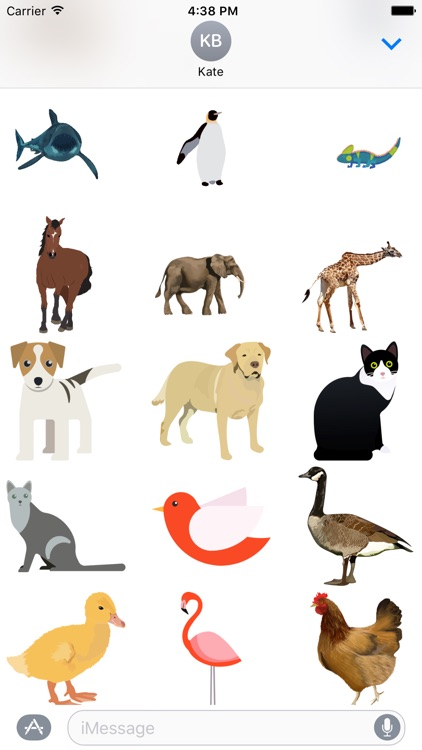 Buncee Animals