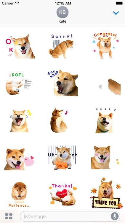Maru The Shiba Dog