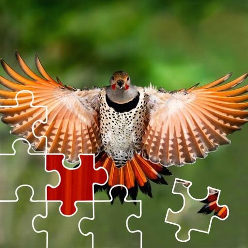 Birds Puzzle Master icon
