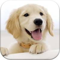 Codes for Dog Pairs - Play match puppies and baby dogs! Hack