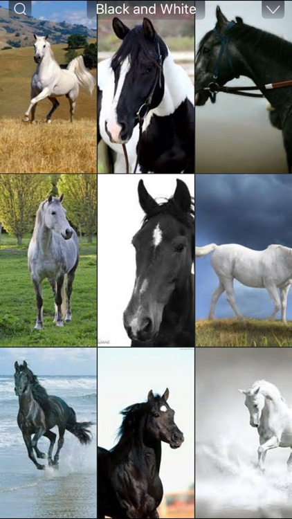 Horse Wallpapers HD - Collection of Running Horses