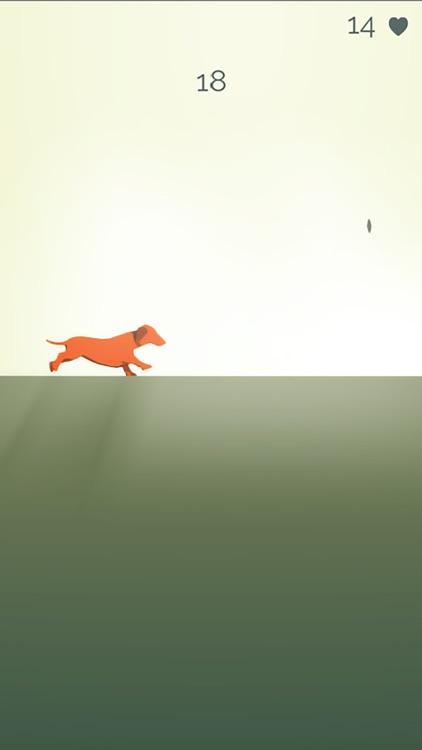 Dash Hound