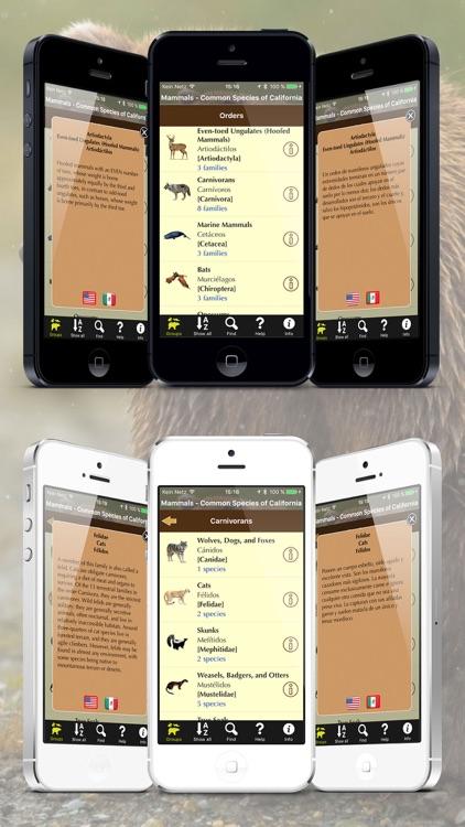 California Mammals – Guide to Common Species screenshot-3