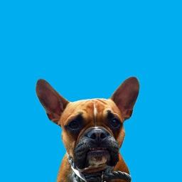 Otis - Cute and Funny Bulldog Stickers