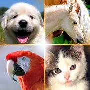 Cute Pets Slideshow & Wallpapers (HD)
