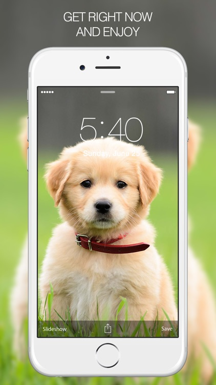 Puppy Wallpapers – Cute Puppy Pictures & Images screenshot-4