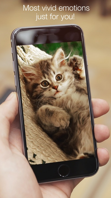 Animals fluffy, beautiful, lovely screenshot one