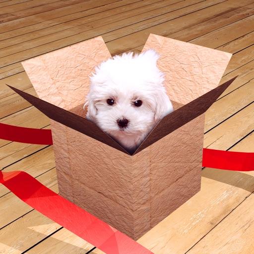 脱出ゲーム in the Box
