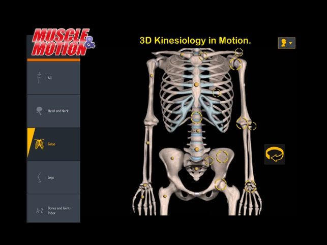 Muscle And Motion Anatomy On The App Store