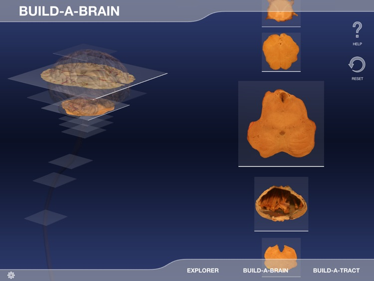 Build-A-Brain Explorer screenshot-3