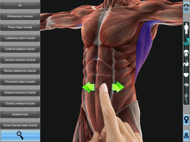 Human Anatomy Pro 3d On The App Store