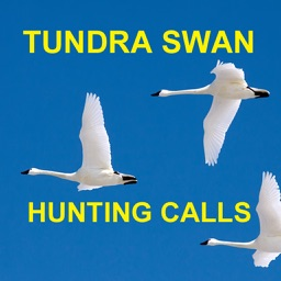 Tundra Swan Hunting Calls -BLUETOOTH COMPATIBLE HD