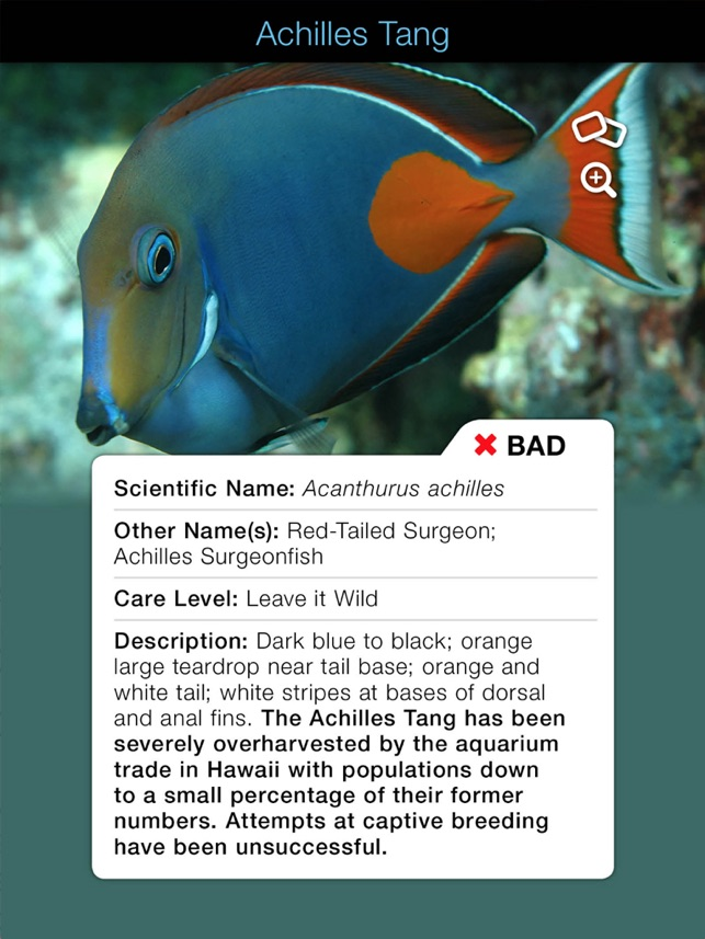 Tank Watch: Good Fish / Bad Fish on the App Store
