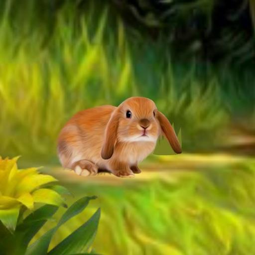 Rabbit River Escape