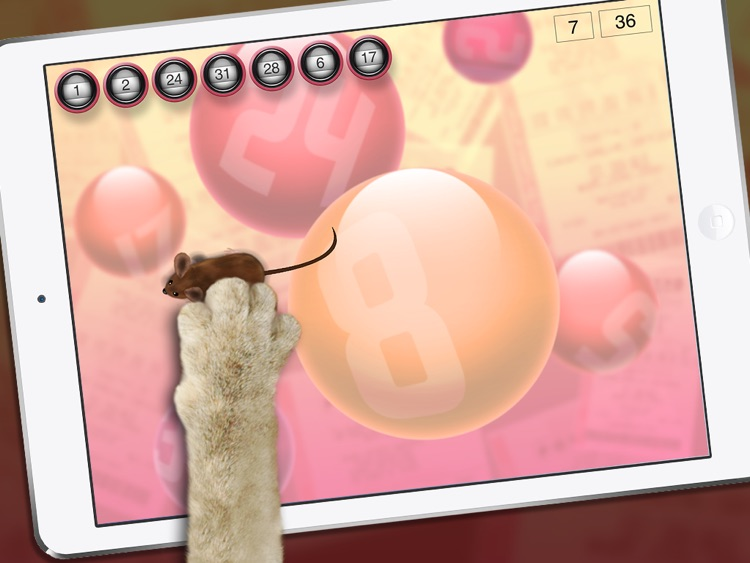 Lucky Cat Lottery Numbers - Catch Game For Cats screenshot-3