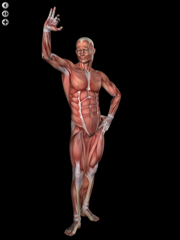 360 Anatomy for Artists HD: Male Figure | App Price Drops