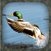 Duck Hunting Calls app review