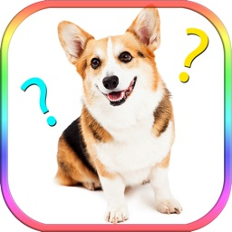 Dog images compare word guessing exercise quiz