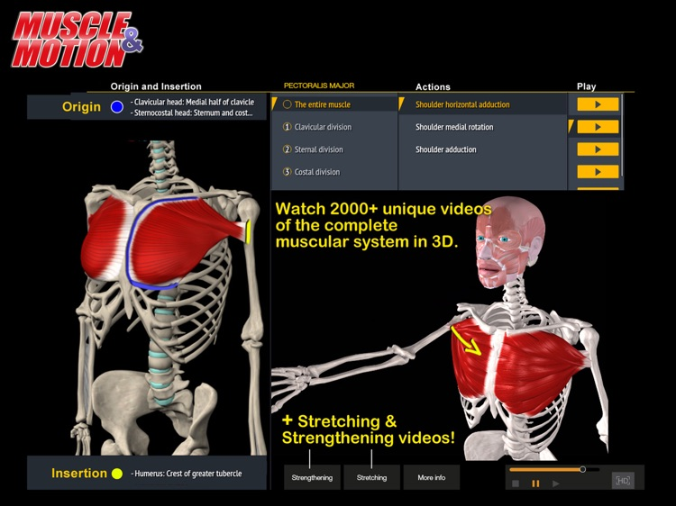 Muscle and Motion Anatomy screenshot-1