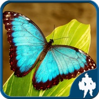 Codes for Butterfly Jigsaw Puzzle Game Hack