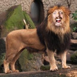 Zoo Me!