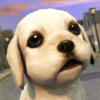 Codes for Dog Care Simulator: Save your Puppy from the Cars! Hack