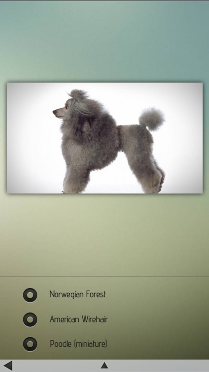 Cats and Dogs Breeds screenshot-4