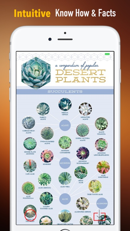 Succulents Plant for Beginners:Care Tips and Guide