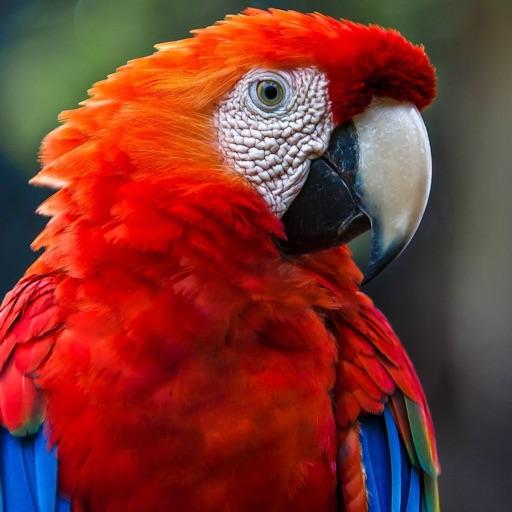 Parrots Zoo