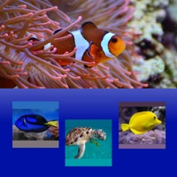 Codes for Which Is The Same Fish? for Clownfish and Friends Hack