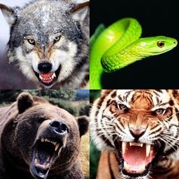 Animal Sounds Pro!