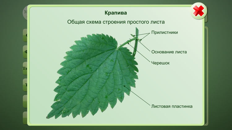 Biology Plant handbook screenshot-2