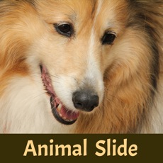 Activities of Animal Slide Image Puzzle