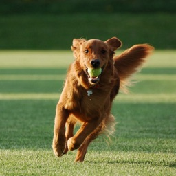 How to Train Your Dog-Puppy Training and Guide