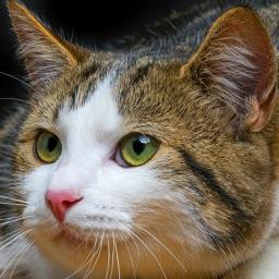Cat Training - Basic Tips For Beginners