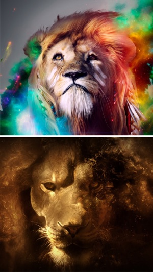 Lion Wallpapers Hd Great Lions Pictures Catalog On The App Store