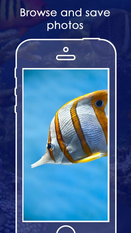 Live Aquarium HD Wallpapers | Backgrounds