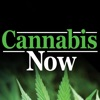 Cannabis Now Reviews