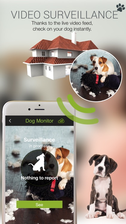 Dog Monitor : watch your dog while away !