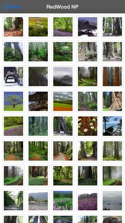 Redwood National Park screenshot-4