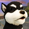 かわいい 犬 ねこ 大戦争 - シティ 子犬 白猫 ラッシュアイコン