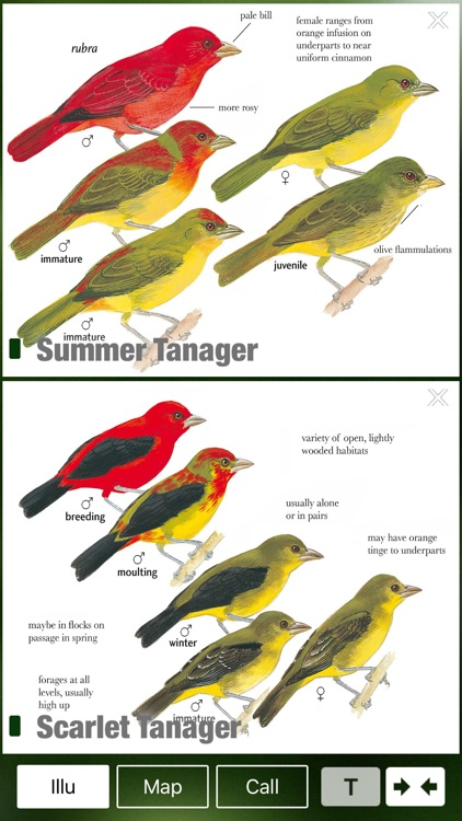 All Birds Trinidad and Tobago - a field guide screenshot-3