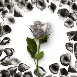 Flower Greetings Silver Roses